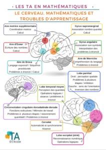 Les parties du cerveau et les habiletés en mathématiques