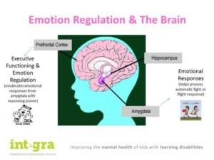 Image: Regulation d'emotion et cerveau
