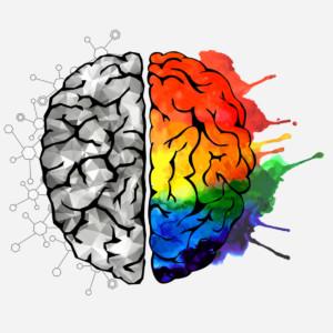 Cerveau coloré