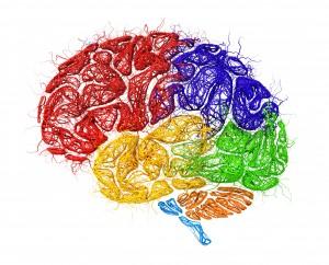 image d'un cerveau coloré