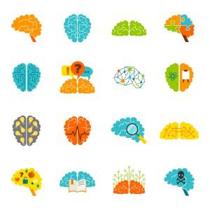 16 cerveaux de couleurs différentes